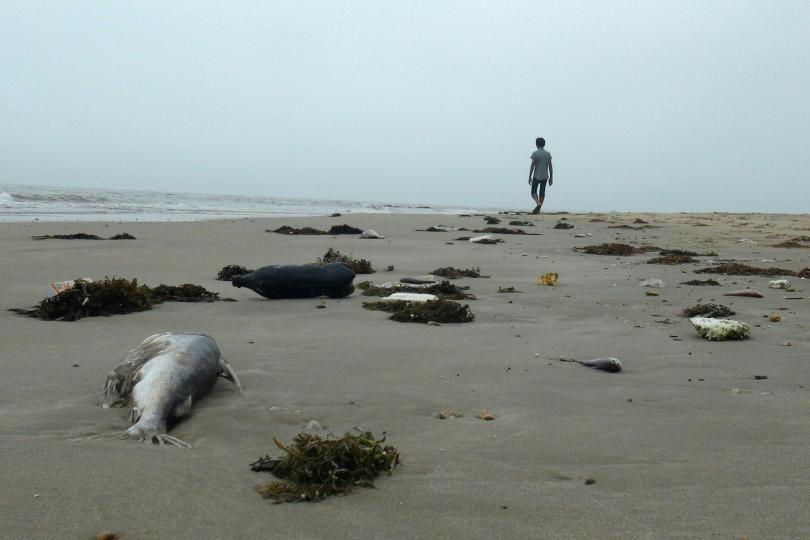 Ảnh chụp ngày 20/4/2016, cho thấy một người đàn ông đang trên bờ biển giữa những con cá chết ở một bãi biển thuộc huyện Quảng Trạch, tỉnh Quảng Bình. Ảnh: STR / AFP / Getty Images